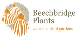 Beechbridge Plants